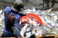 US cuts anti-dumping taxes on Vietnamese catfish