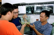 HCM City eyes 23 million USD from ornamental fish exports