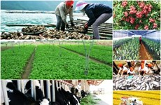 National online conference to be held on agriculture, farmers, rural areas