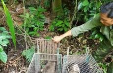 Phong Nha-Ke Bang National Park releases 11 rare animals