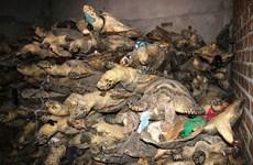 Vietnam continues urgent action for wildlife crime prevention