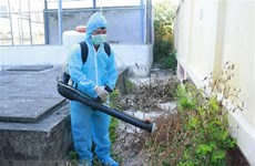 Hanoi continues to take action against dengue fever