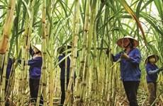 Vietnamese sugar mills struggle to compete