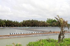 Tien Giang develops saltwater, brackish-water aquaculture
