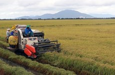Southern region hits target for rice harvest
