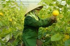 Central Da Nang city eyes hi-tech farms
