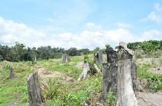 Dak Lak's forest coverage decreases