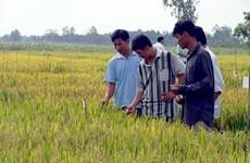 Hau Giang, RoK organisation continue hi-tech farming cooperation