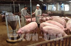 Vietnam needs national framework for safe pork