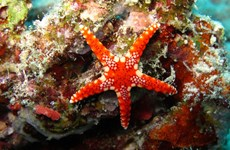 Indonesia hosts Fifth Our Ocean Conference