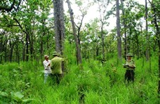 Vietnam, Laos step up collaboration in forestry law enforcement