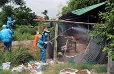 Bird flu detected in Phu Yen province