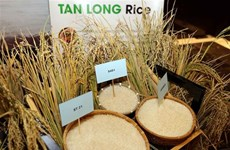 Vietnam Rice Festival 2018 to take place in Long An in December