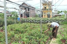 Ninh Binh province's farms go high-tech