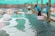 Ben Tre aims to increase aquaculture area to 50,000ha