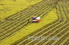 Agricultural sector needs more locally made machinery