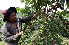 Dak Nong to host Vietnam Coffee Day in December