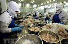 Bac Lieu looks toward 1 billion USD in shrimp export earnings