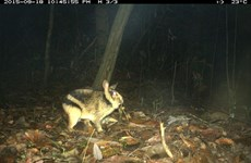 First insight into the ecology of an elusive and threatened rabbit