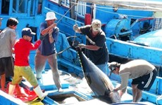 Sharp rise in tuna exports to Israel