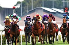 Horse racing course to be built in Hanoi