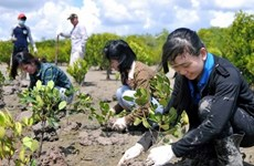 Tree planting festival on lunar New Year occasion launched
