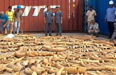 Cambodia seizes over 3.2 tonnes of ivory