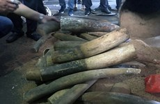 Vietnam's illegal ivory market is thriving