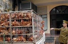 Ministry asks for concerted efforts to prevent poultry smuggling