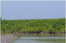 Mangrove forests used to breed aquatic species