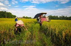 Crop cultivation sector targets 21 bln USD in export this year
