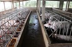 Vietnam improves animal farming quality