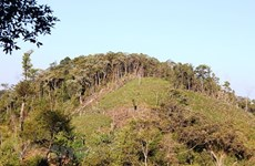 100,000ha of forest to be under sustainable management each year