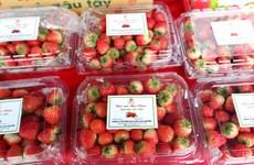 Son La strawberry, farm produce week opens in Hanoi