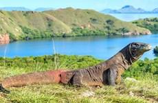 Indonesia to temporarily close Komodo Island