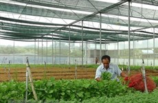 Vietnam targets to attract 100,000 agricultural businesses