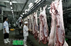 HCM City to open six cattle slaughterhouses