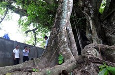 Six more trees recognised as national heritage tree