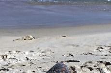 Rare sea turtle sent back to ocean