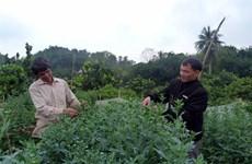 Tuyen Quang farmers bloom with Da Lat daisy