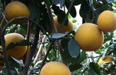 Dien pomelo - a Hanoi speciality