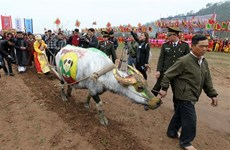 Painting contest held for buffaloes joining ploughing festival in Ha Nam