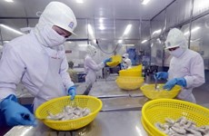 Kien Giang focuses on shrimp farming in 2019