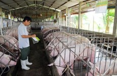 Livestock sector moves to boost exports in 2019