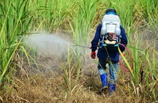 Pesticide products with chlorpyrifos-ethyl, fipronil banned in Vietnam