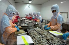 Shrimp exports to RoK expected to rake in 500 million USD