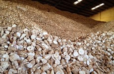 Vietnam to face difficulties in cassava exports