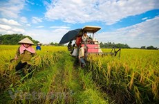 Mekong Delta province provides housing land for poor households