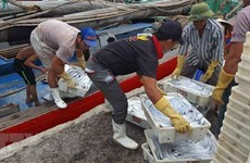 Urgent solutions needed to address EU's warning of IUU fishing: ministry