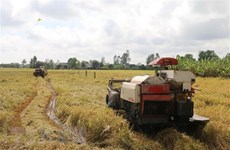 State Bank instructs provision of loans for rice procurement